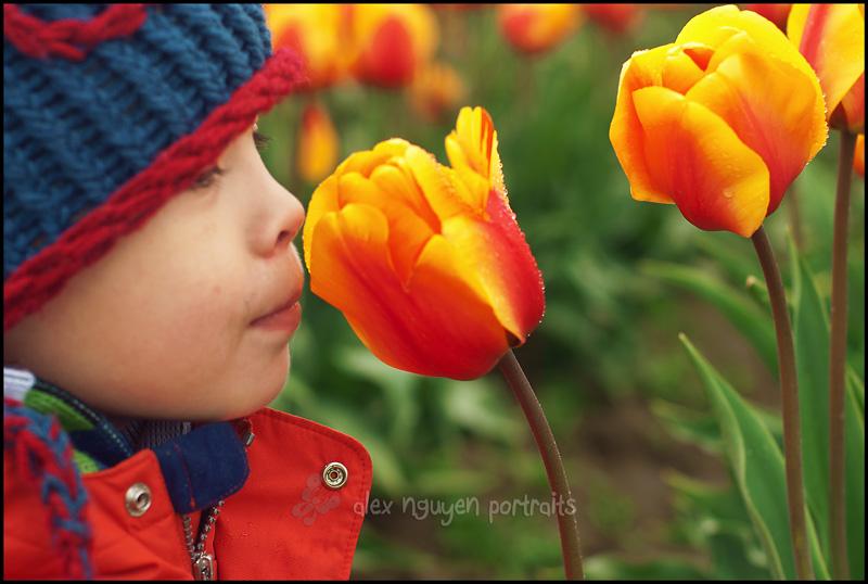tulip11WM