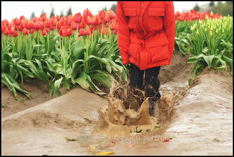 tulip13WM