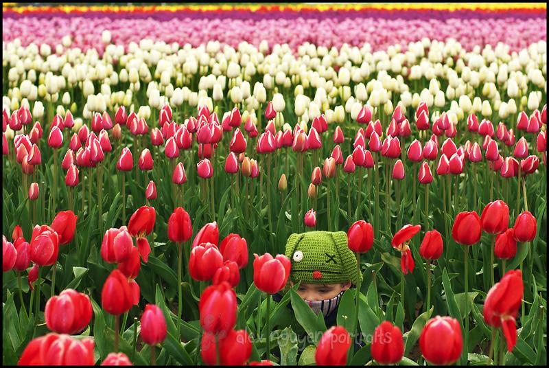 tulip2WM