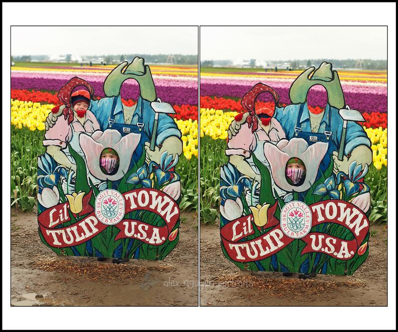 tulipsSB6WM