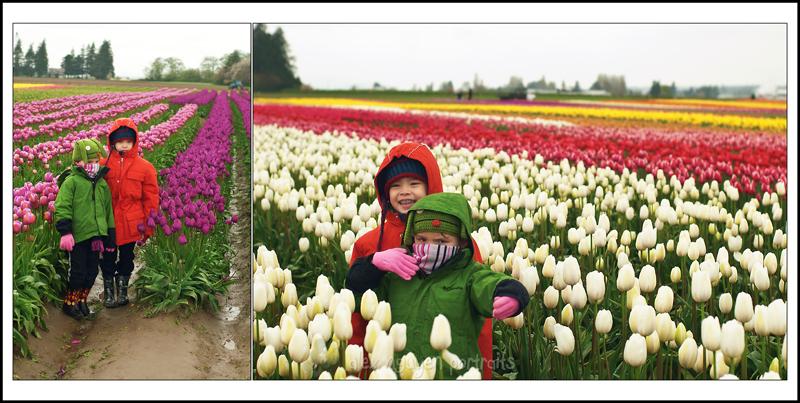 tulipsSB9WM